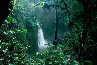 Resultados de la Búsqueda de imágenes de Google de http://d30mmglg94tqnw.cloudfront.net/wp-content/plugins/magic-gallery/uploads/9/Aventura-en-la-selva-del-amazonas.jpg