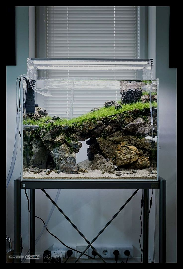 A Glimpse Of The Life Of Pictus Catfish Theo Crn Di 2020 Kebun Ikan Akuarium Akuarium