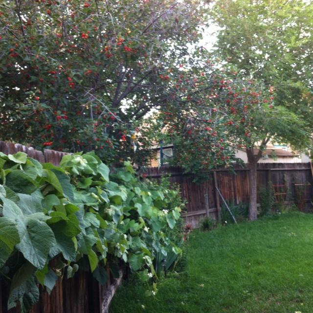 102 best images about garden vines on pinterest white - Grey gardens dive per sempre ...