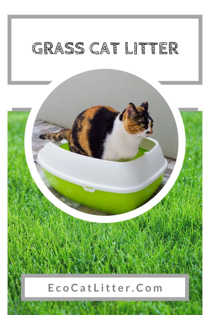 Grass Seed Cat Litter Review SmartCat All Natural