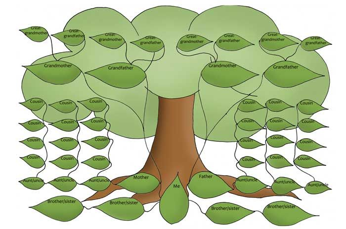 родословное дерево картинки - Поиск в Google