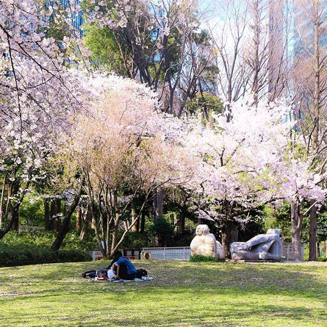 Romance under the cotton candy trees 🌸🌸🌸🌸 #japan #sakura #tokyo #shinjuku #april #instatravel #instamoment #travel #travelblogger #東京 #日本 #4月#桜 #peaceofmind #wanderlust #travelphotography #yumetraveller #traveller #sun #home #soulcity #travelersnotebook #travelblogger  #cherrytree #cherryblossom #春   #instaflower #instatree #instaromance #cottoncandy