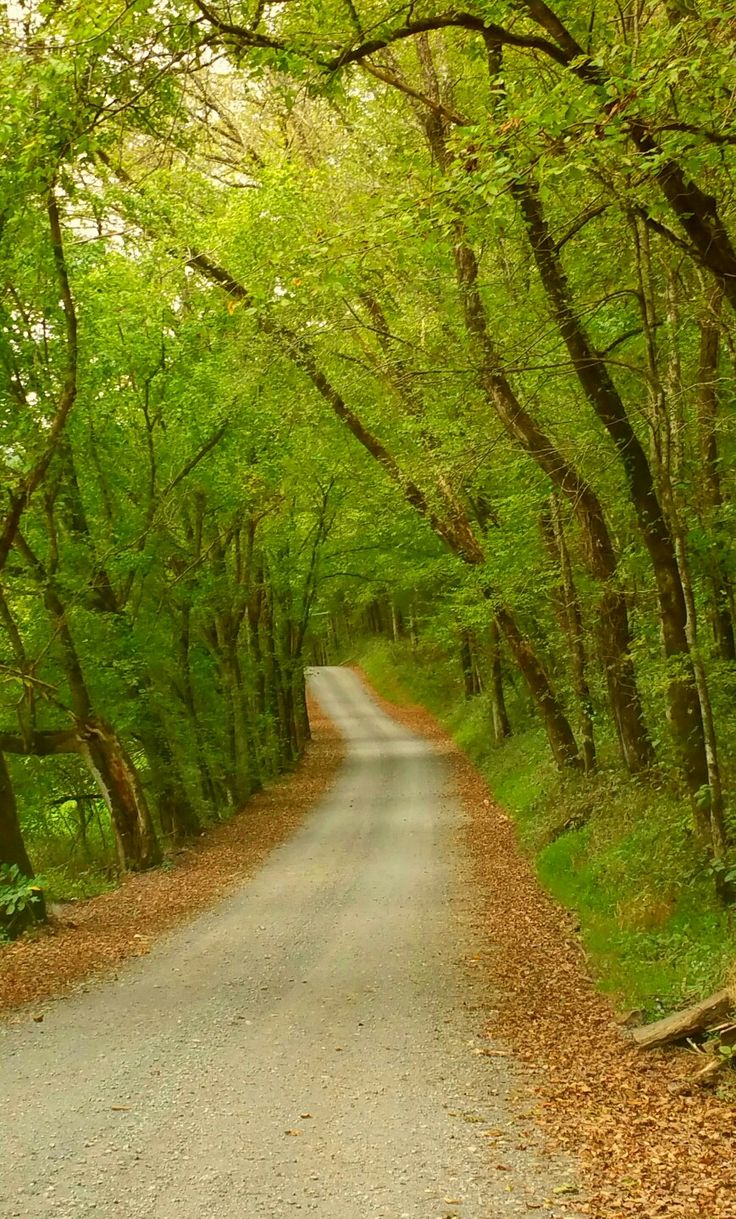 A Tennessee Country Roadtrip. Photo taken by Robin Shake. Tenn. and Kent. have some of the most beautiful country roads.