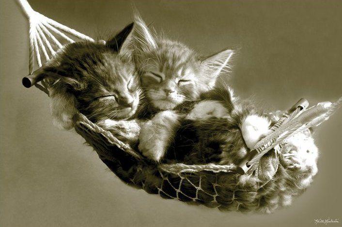 Cicák függőágyban poszter