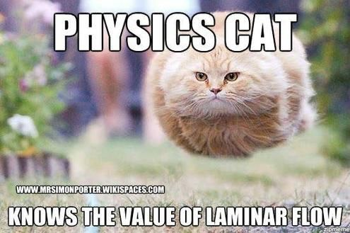 Cute And Funny Kittens Learn Physics