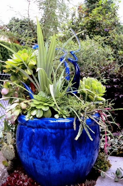 Blue container garden with glass ornaments, from the garden of Tina Dixon. Beautiful! Check out King's Flower and Garden for a great selection of life like succulents.