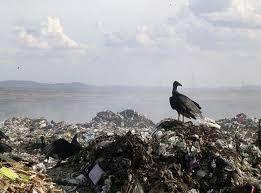 Ser Sementinha: Reciclar - Vamos começar?