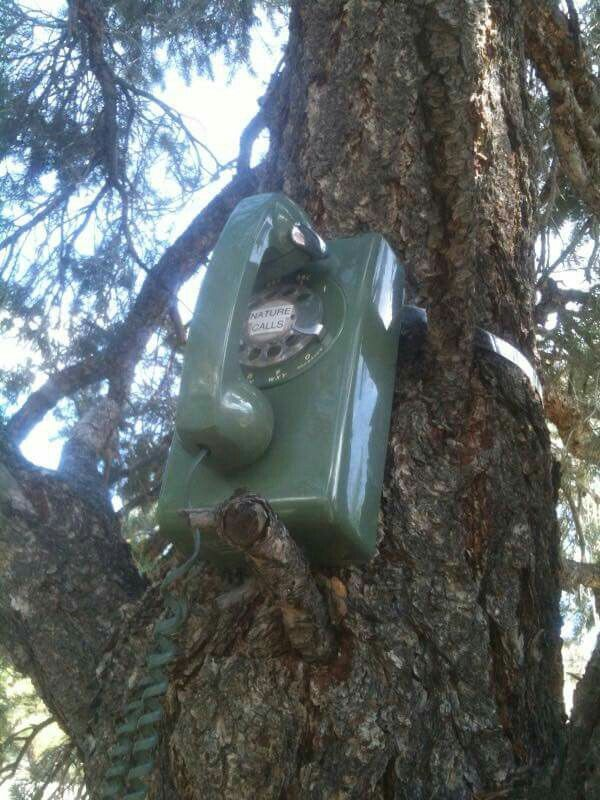 """Phone geocache.  I like that on the dial it says """"Nature Calls"""".  :)"""