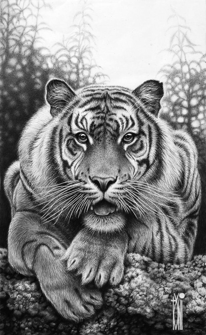 730 best pencil drawings images on pinterest drawings animal