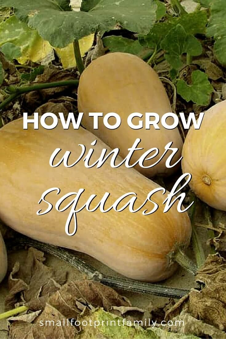 How To Grow Winter Squash Pumpkins The O Jays And Storage 400 x 300