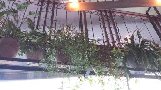Je vensterbank ca. 70cm. voor het raam onder het plafond gedecoreerd  met groene kamerplanten...vooral mooi bij een groot raam.