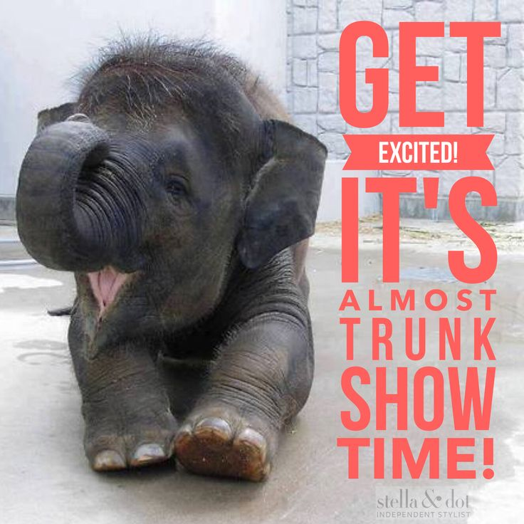 Get excited it's almost stella & dot trunk show time party @stellaanddot