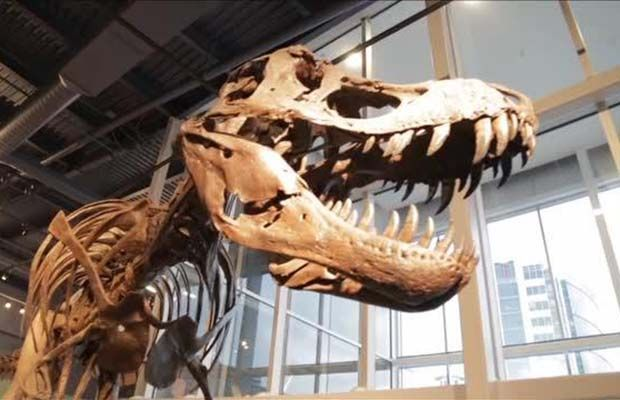 Video: How's That? How old are the oldest dinosaur bones ever found? A new weekly video series
