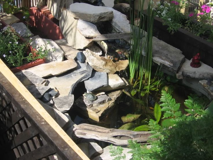 DIY Pond made from a Rubbermaid tote.