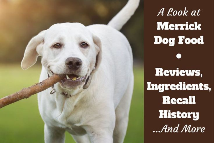 Merrick dog food reviews ingredients recall history and