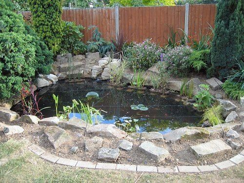i want a little coy pond in my back yard :)