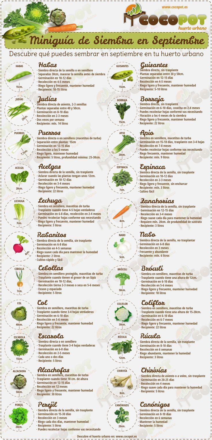Miniguía de Siembra de semillas en septiembre para Huertos