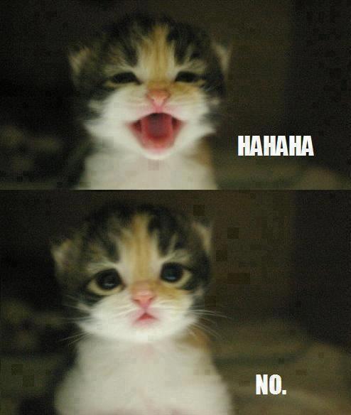 Hahaha - no... sweet kitten!