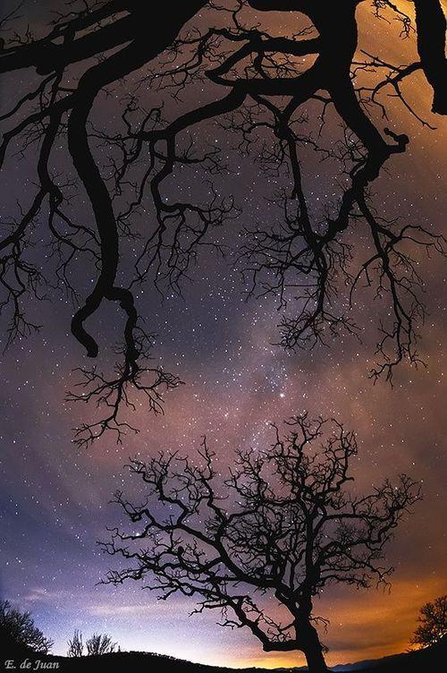✯ Tree and Stars - Malaga, Spain