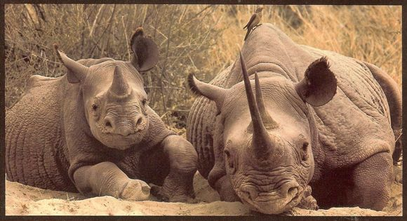 www.stoprhinopoaching.com - please create awareness. Save our Rhinos