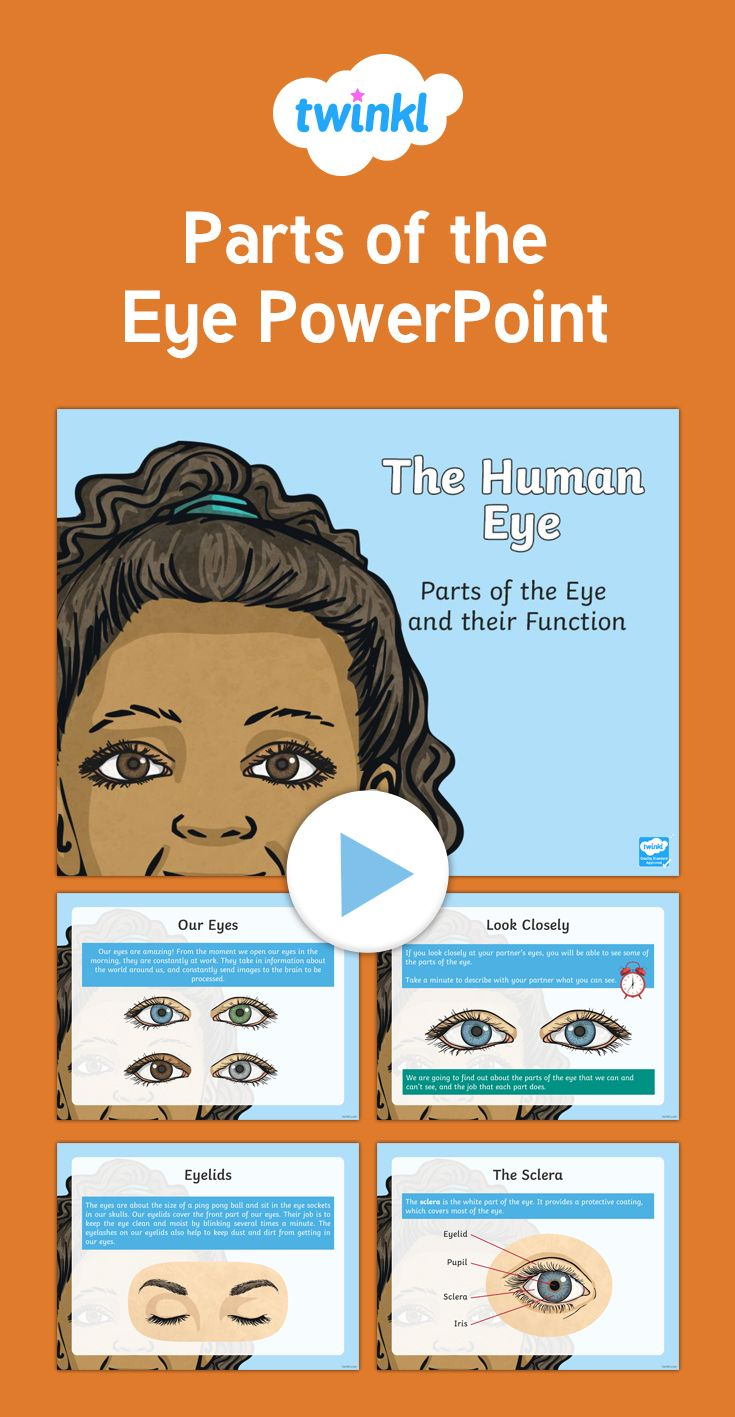 Parts Of The Eye Powerpoint  Cfe Second Level Powerpoint On The Parts Of  The Eye
