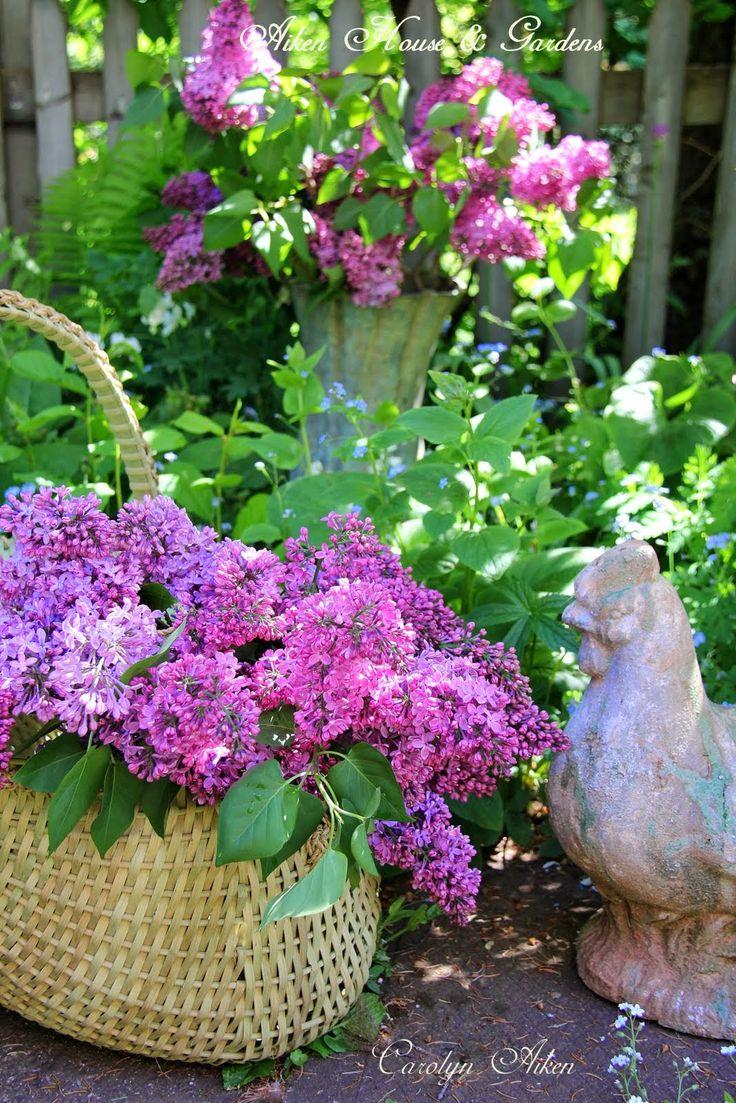 Aiken House  Gardens: Lilacs and Garden Vignettes