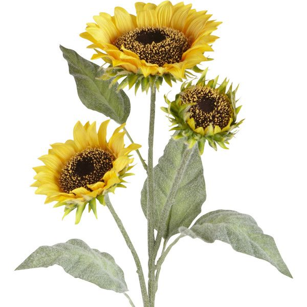 Pier 1 Imports Yellow Faux Sunflower Spray ($8.95) ❤ liked on Polyvore featuring home, home decor, floral decor, yellow, pier 1 imports, yellow home accessories and yellow home decor