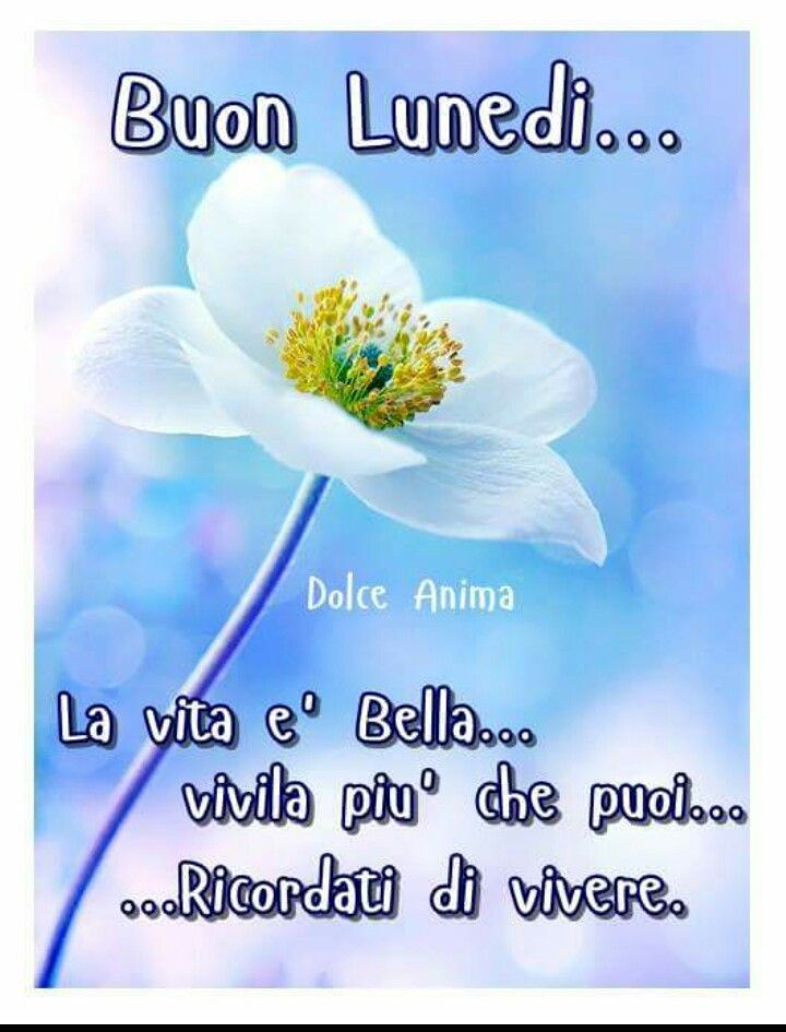 Preferenza 264 best Buon lunedi images on Pinterest | Messages, Peanuts and  ZR01