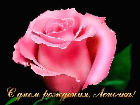 Анимация Красивая розовая роза на черном фоне. (С Днем рождения, Леночка!)