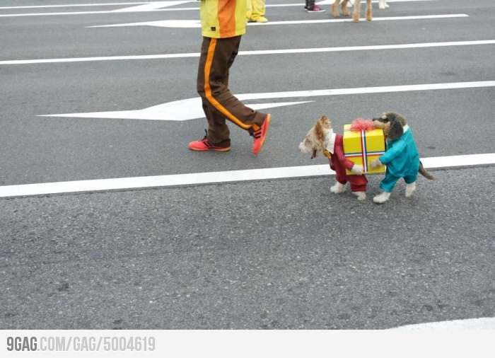 Epic dog costume is epic