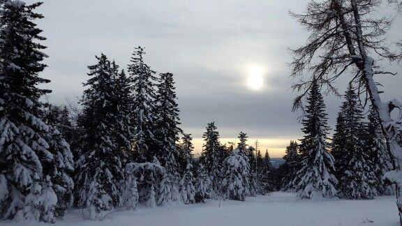 Urenga - winter forest in Ural Mountains