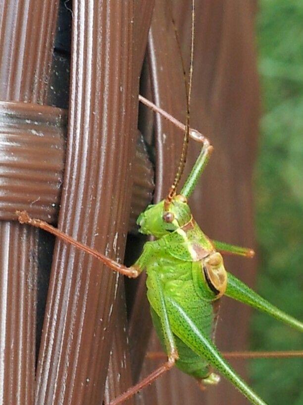 Angst voor insecten?