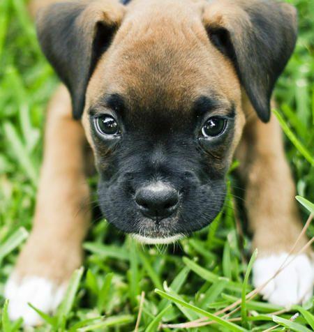 Tough Dog Names For Boxers