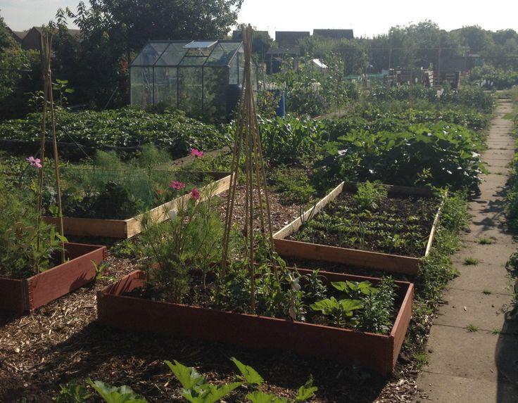 Help we39ve got an allotment ideas tips and we for Garden allotment ideas