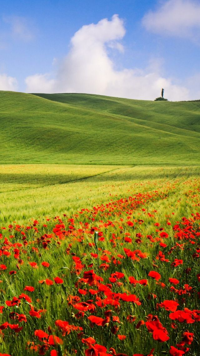 Green scenery and red flowers