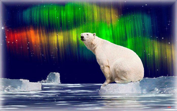 Анимация белые медведи