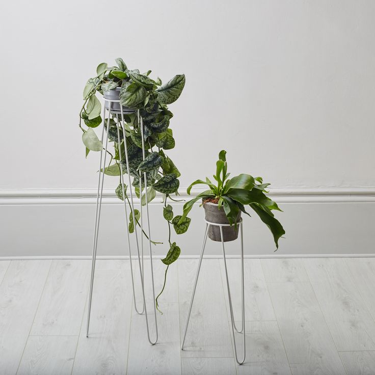 Geo-Fleur :: White powder coated plant stands, perfect to pop in some potted plants, if  you're running out of shelf space!  Please note these plant stands are made to order - in Kent -so there may  be a slight delay but we will keep you updated.  They come in two sizes, 50cm and 90cm.