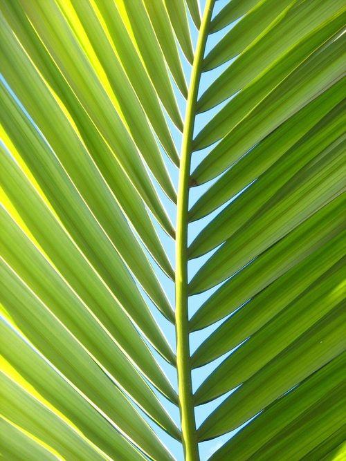 A Sexologia Controversa dos Seios: Palma de Palmeira