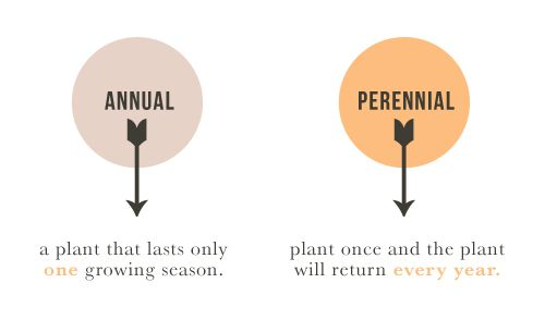 Why can't I seem to remember this correctly?  Annuals vs Perennials  aka- why I'm sticking to cactus this year... pun intended