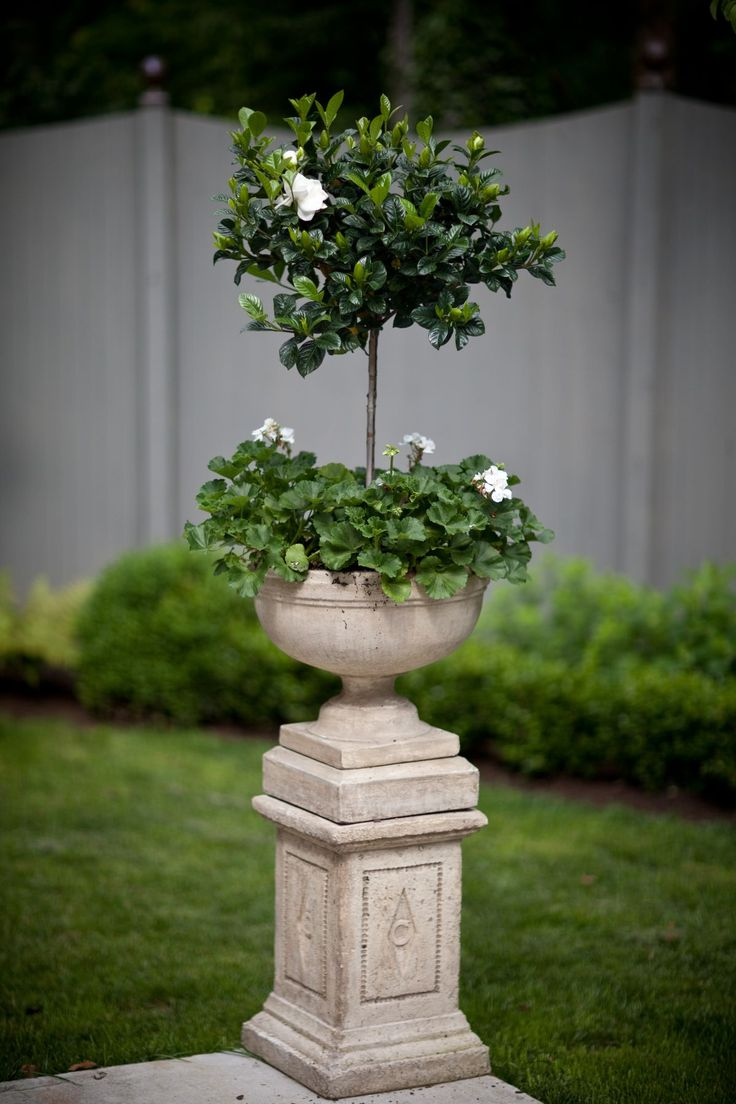Gardenia topiaries for a fragrant outdoor wedding