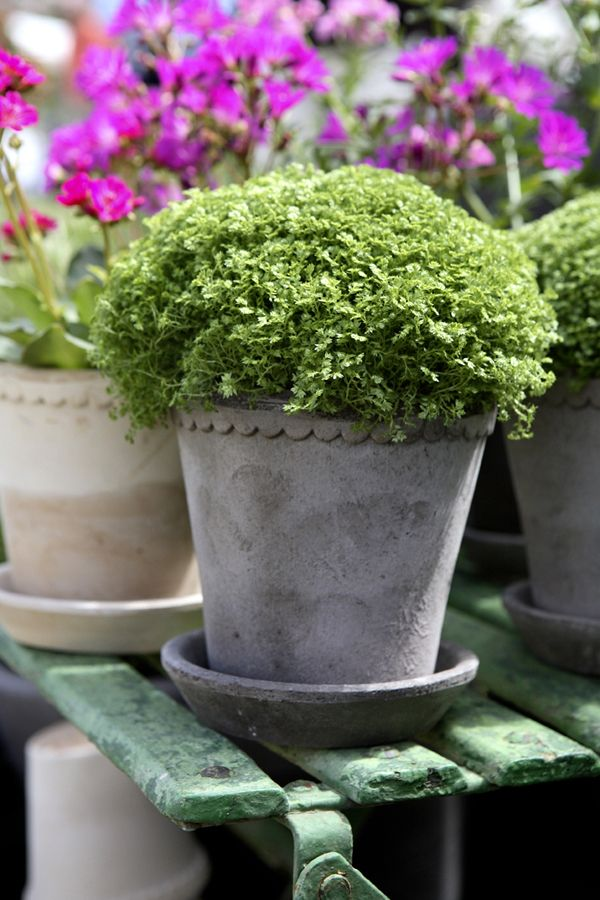 Plant Pots full of Colour