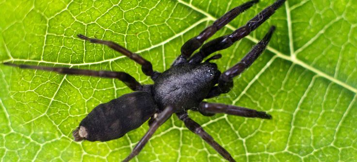If you are Scared from spiders and rats at home? then Safe Pest Control is here to resolve your problem with the help of best pest services