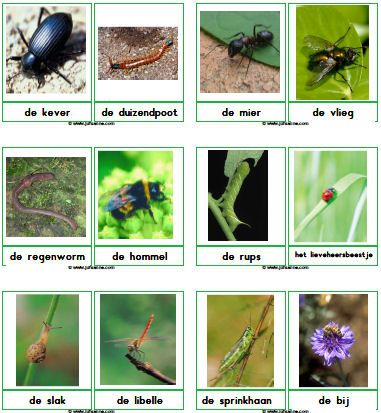 Insecten downloads - Juf Sanne