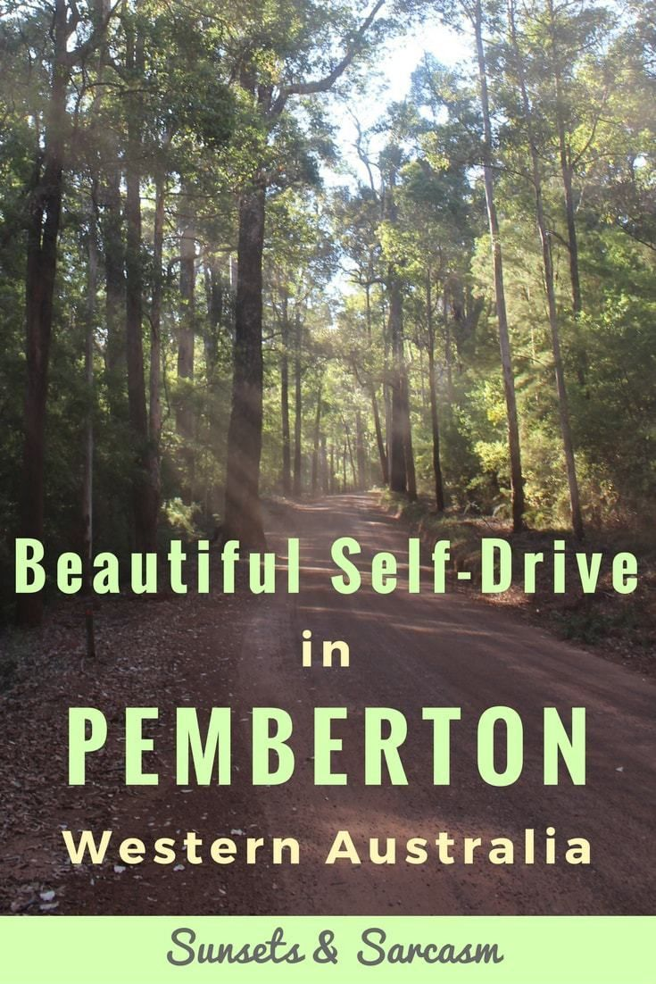 A self-drive to explore Tall Timber Country in Pemberton Western Australia. See highlights of the 86km Karri Forest Explorer Drive through the Southern Forests of Pemberton WA, including climbing the Dave Evans Bicentennial tree & camping at Big Brook Arboretum.