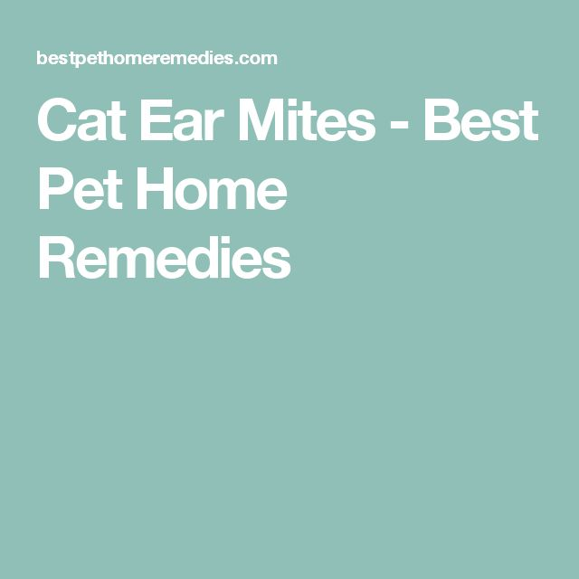 Cat Ear Mites - Best Pet Home Remedies