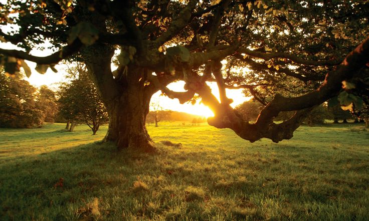sunset orchard in County Armagh #ComeHome #VisitSouthArmagh www.crosssquarehotel.com
