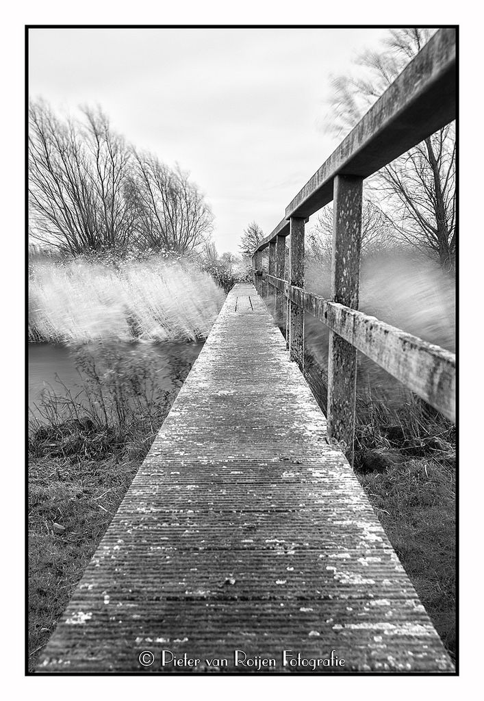 "https://flic.kr/p/PijxV3 | Upon the catwalk. | a small and quite shaky wooden bridge over the wetlands in ""natuurgebied Tiendgorzen""   Made with Sony A99 and Sony 20mm f/2.8, B+W 110 MRC F-Pro ND filter NIK SilverEfex Pro  Exposure: 30 seconds f/5.6 ISO50"