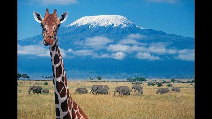 DOCUMENTALES DE ANIMALES 😜👍 AFRICA,VIDA Y MUERTE EN LA SABANA,ANIMALES S...
