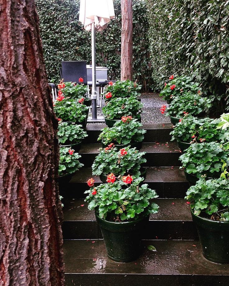 Foto de @eliodora22 en Instagram Géraniums #museopicasso #m#garden #red #green #flowers #stairs #photoftheday #igdaily #travelphotography #costatropical #igerspain #malaga #igersmalaga