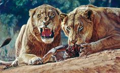 Man Eaters of Tsavo, 2002 - Works - John Banovich